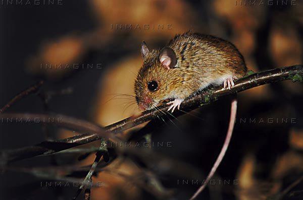 HelpWildlifecouk Small Mammals